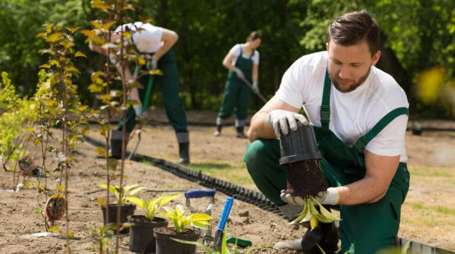 6 Ways to Improve Your Gardening Business