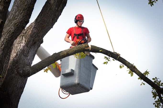 Starting a Tree Trimming Business