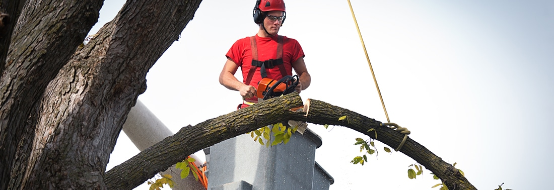 Starting a tree cutting business
