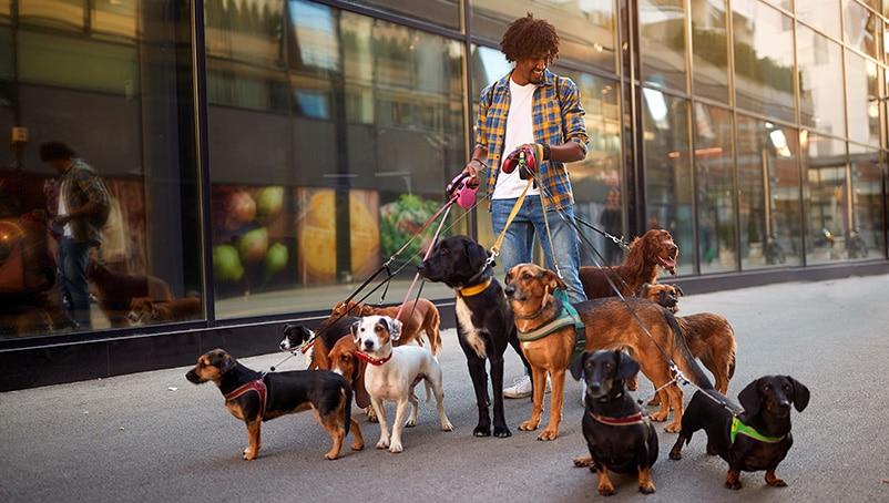 Comprehensive Dog Walking License Guide