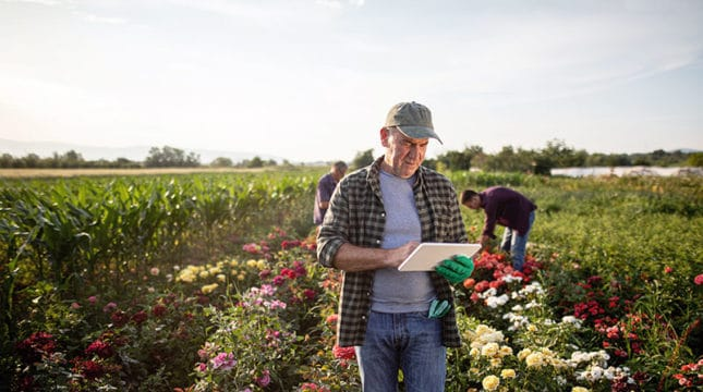 Ideal Small Business Ideas for Rural Areas